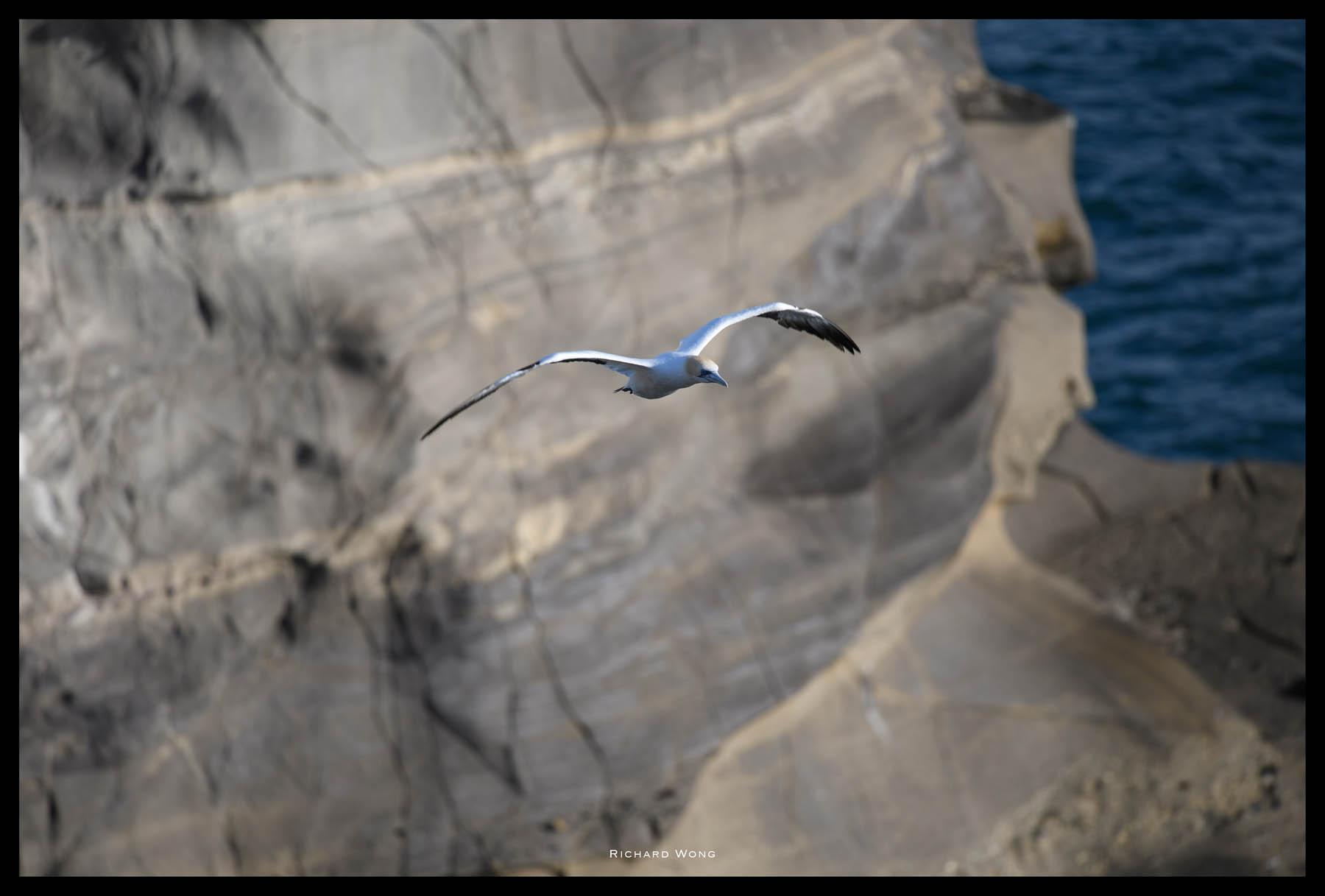 photograph small birds with nikon