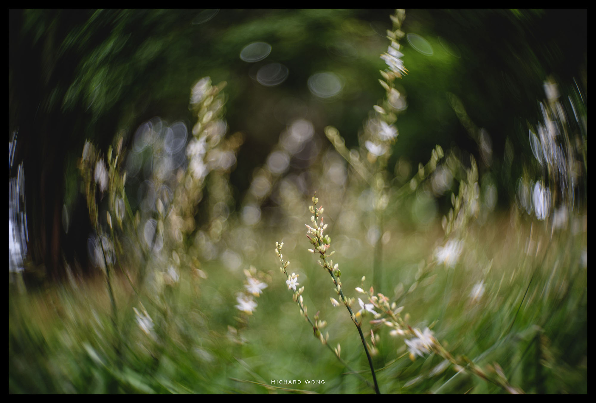 lomography-petzval-58-review-32